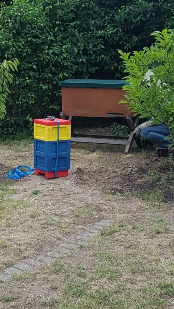 Mini Plus und Bienenbox Schwarm 1