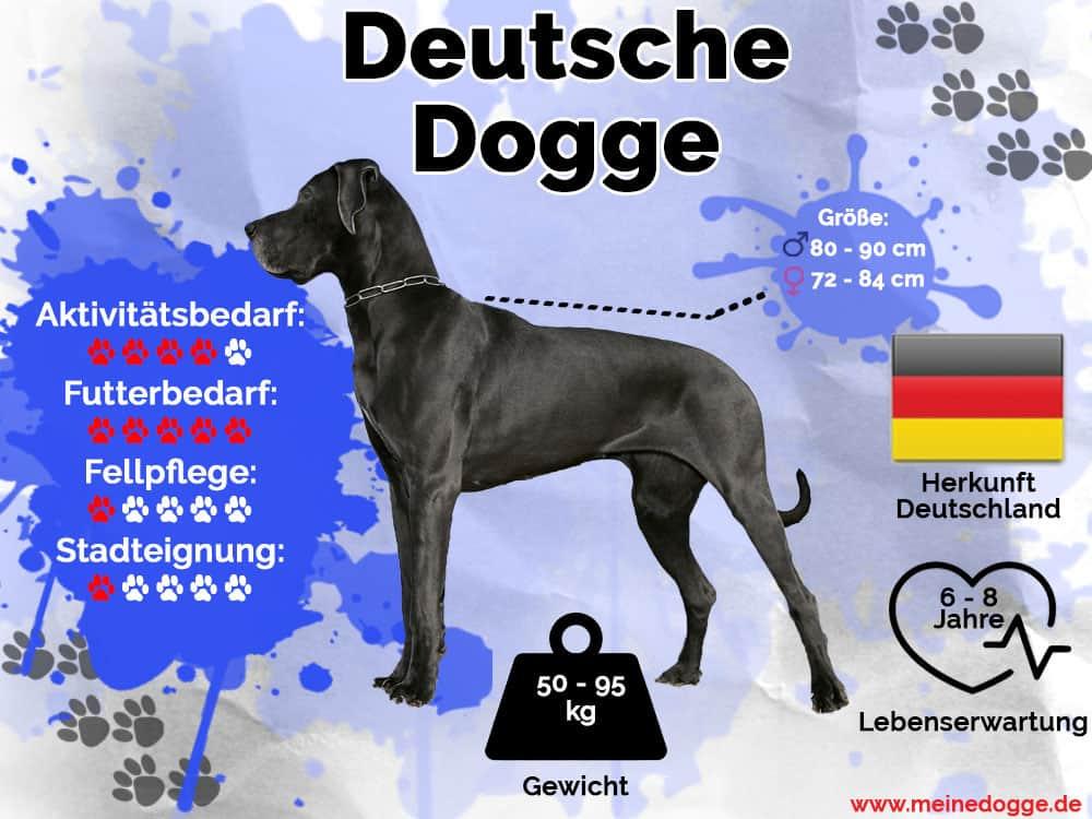 Deutsche Dogge Infografik