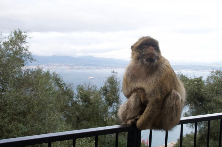 the apes den