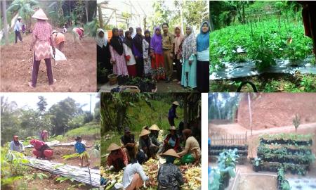 Kegiatan Pengolahan Lahan, penanaman di halaman rumah dan pengolahan hasil panen KWT MEKARWANGI.
