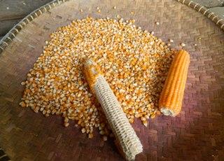 Pertanian: MENGHITUNG PRODUKSI JAGUNG