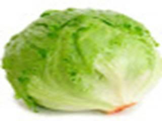 Pertanian: Selada Krop (Heading Lettuce) Memberikan Keuntungan Cepat