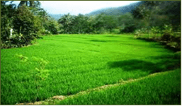 Pertanian: Pundi Desa