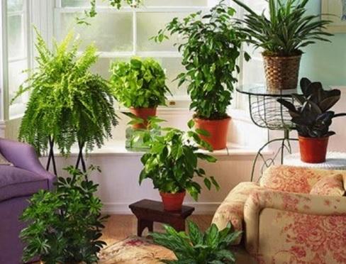 Inilah 9 Cara Merawat Bunga Indoor agar Tetap Segar | Artikel Pertanian