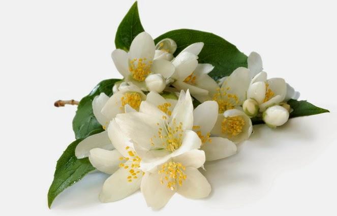 5 Cara Menanam Bunga Melati dengan Stek Bagi Pemula | Artikel Pertanian