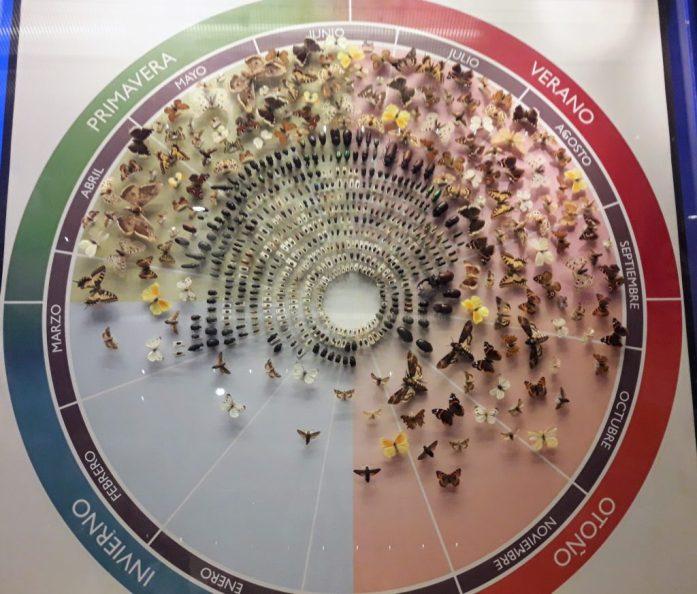 museu ciencias naturais madrid insetos