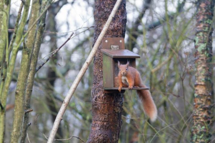 Red Squirrel, Vane Farm, Kinross, Scotland Travel Tips