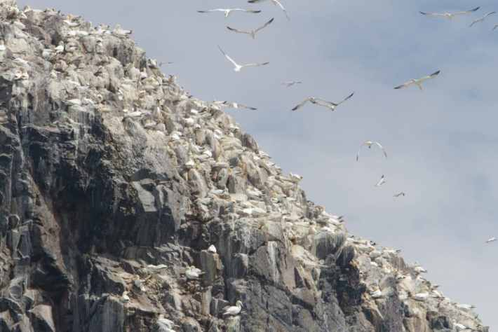 Bass Rock, Scottish Seabird Centre, Scotland Travel Guide