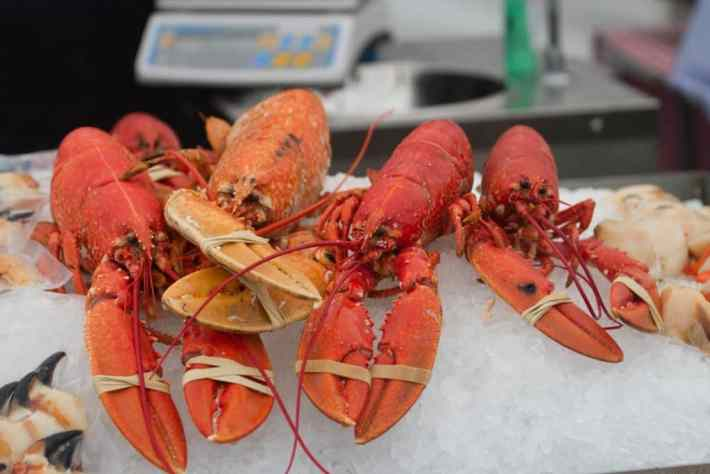 Photo of four lobsters on ice. Their claws are bound with elastic bands.