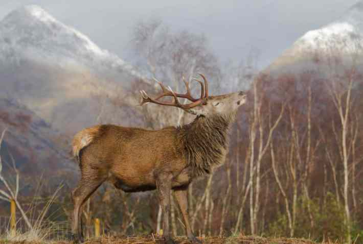 Glen Etive, Red Deer, Wildlife, Scotland Travel Blog