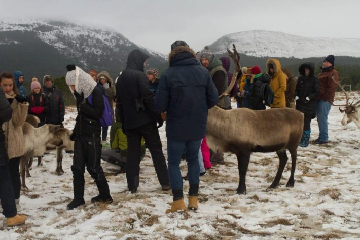 A group of people on a tour to meet and hand feed reindeer