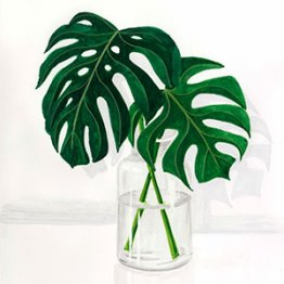 Monstera - Gouache