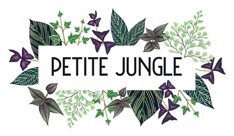 logo-rectangle-petite-jungle-melanievoituriez