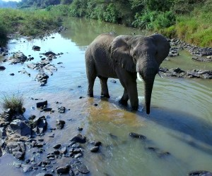 Elephant in the river drone footage from Melcom Van Staden Productions
