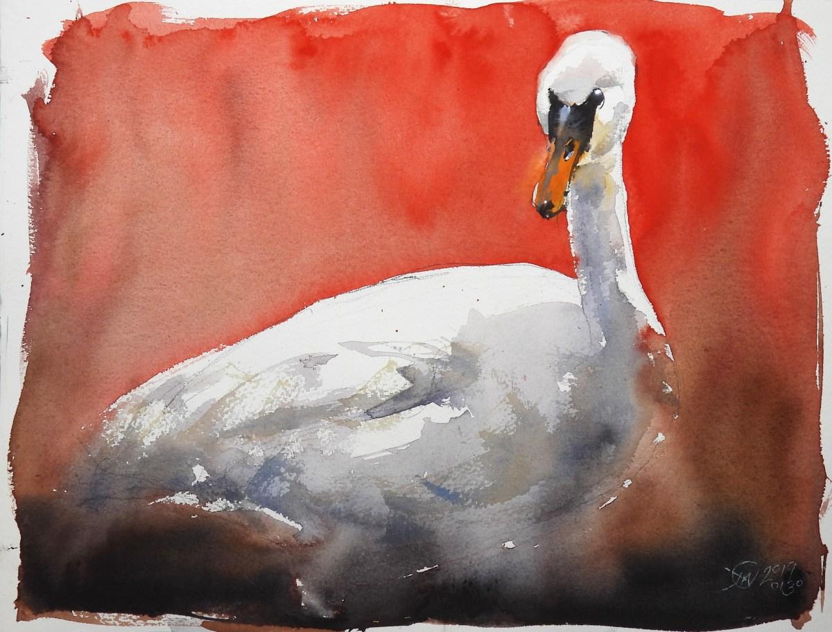 Swan sketch by David Meldrum