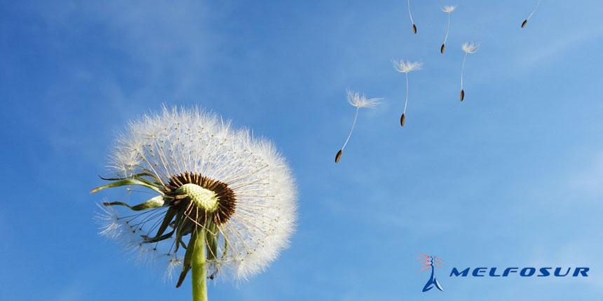 Imagen de una flor exparciendo semillas con el viento en relación con el desarrollo sostenible de energías renovables en España