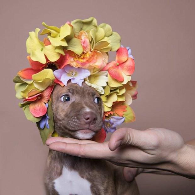 Resultado de imagem para cachorro com coroa de flores