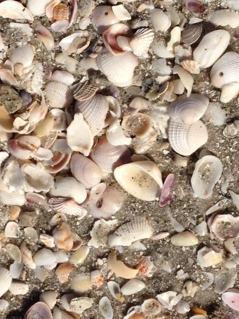 seaside art - shells