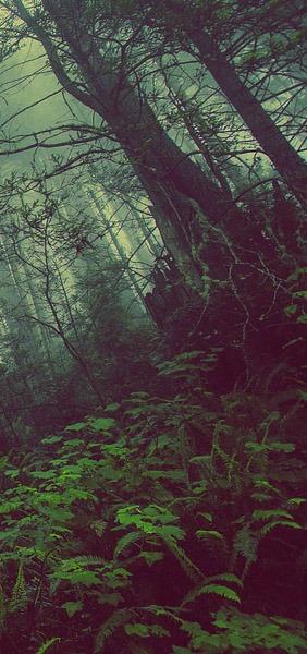 forestcrop4