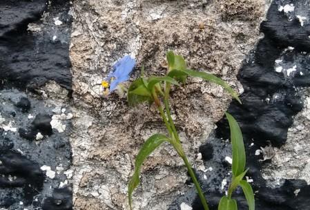 Obliviate: uma flor nasce num canto da calçada e, em poucos dias, desaparece para sempre...