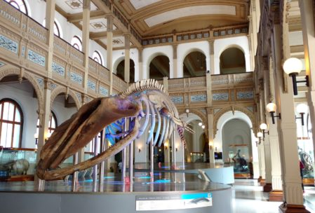 No Museo de Historia Natual
