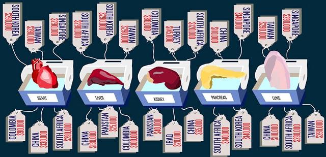 organ trafficking cost chart