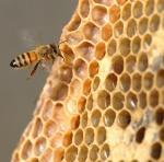 Αλληλεπίδραση Φαρμάκων μεταξύ Ακαρρεοκτόνων εντός κυψέλης και Μυκητοκτόνων σε Μέλισσες