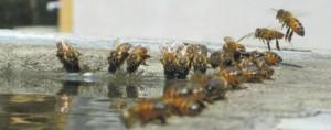 Καλοκαιρινοί Μελισσοκομικοί Χειρισμοί