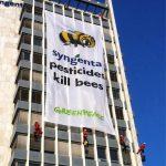 Greenpeace: Τα φυτοφάρμακα της Syngenta σκοτώνουν τις μέλισσες