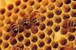 Εγκρίθηκαν τα προγράμματα μελισσοκομίας για την περίοδο 2014-2016