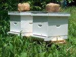 Στήριξη του κλάδου της μελισσοκομίας με 4 εκατ. ευρώ για το έτος 2014 από το ΥΠΑΑΤ