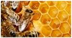 Αιτήσεις για μελισσοκομικές δράσεις στο Μελισσοκομικό Κέντρο ΠΑΣΕΓΕΣ-ΑΤΤΙΚΗΣ