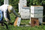 Αιτήσεις στο Μελισσοκομικό Κέντρο Κρήτης για τα Προγράμματα Μελισσοκομίας