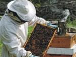 Ταχύρυθμη εκπαίδευση μελισσοκόμων από το Κέντρο «ΔΗΜΗΤΡΑ» Βαρδατών