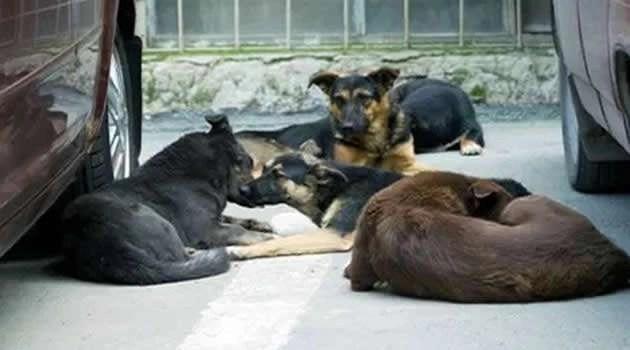"""""""Il nostro è un atto di coerenza e non di protesta"""" dichiara la Consulta Volontari Animalisti di Melito al consigliere Ciampa e al neo assessore De Cicco"""