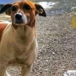 Casandrino. Rinchiude per ore il cane in auto: rompono il finestrino e salvano l'animale