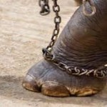 Mozione contro il maltrattamento degli animali al circo