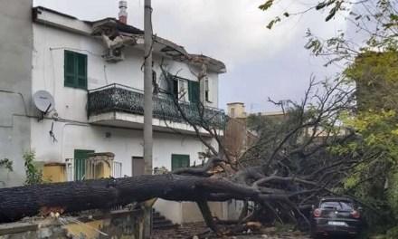 Melito. Danni maltempo, cade albero secolare notevoli danni, fortunatamente nessun ferito