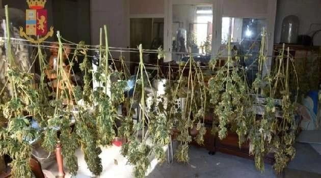 Coltivavano marijuana in casa a Sant'Antimo