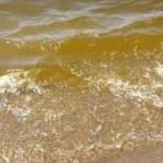 Il mare del litorale domitio marrone. Segnalazioni all'ARPAC e alla guardia costiera