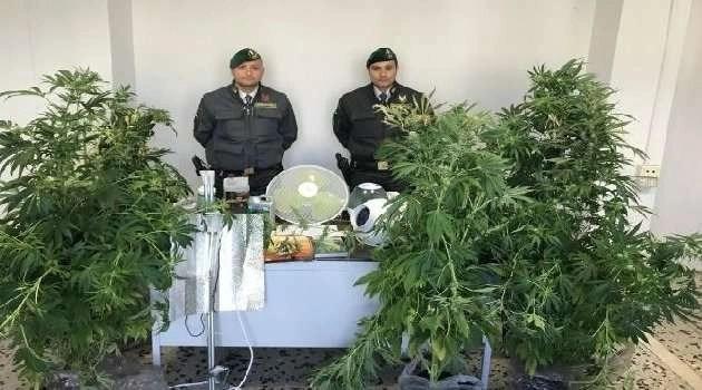 Napoli – Cronaca. Maxi sequestro di marijuana a Pianura