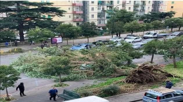 Napoli. Cade un albero a causa del vento