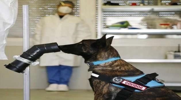 Covid Dog: cani addestrati per riconoscere tramite la sudorazione i soggetti positivi