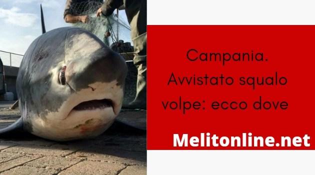 Campania. Avvistato squalo volpe: ecco dove