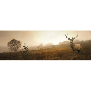 Morning Stag