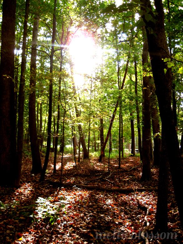 Dog Days of Summer - shady forest
