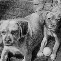 "Bella and Ernie, 2011, Graphite Pencil Drawing on Paper, 4""x6"""