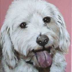 "Benji, 2012, Tibetan Terrier Portrait, Full Colour Acrylic Painting on Canvas, 12""x12"""