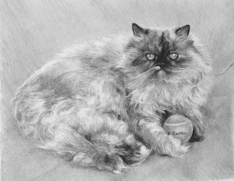 mstarkweather_mulancatportrait_sm