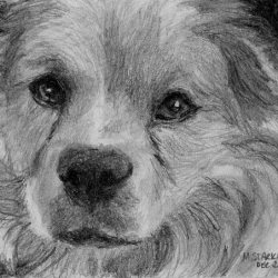 "Sandy, 2011, Terrier Mix Breed Portrait, Graphite Pencil Drawing on Paper, 3""x4"""